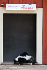 234A2595.jpg (Mark Dumont) Tags: animals bbb cincinnati dumont mammal mark zoo