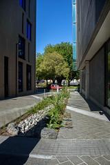 Ally Way (Jocey K) Tags: newzealand nikond750 christchurch building architecture rebuild plants pattens cars trees shadows detail design sky cbd
