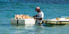 caracola reina (rey perezoso) Tags: 2018 quisqueya caracola caribe hispaniola tourismo republicadominicana caribbean mar ocean atlantic water
