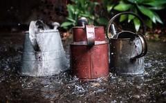 Free water! (Buck777) Tags: chrome 16mm xh1 fuji garden rural rustic shower weather rain wateringcan water