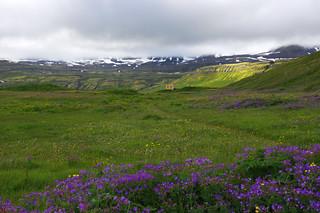 Day 3: Höfn in Hornvík bay