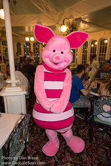 Dinner at the Crystal Palace (Disney Dan) Tags: 2018 spring waltdisneyworld mainstreetusa disney magickingdom themanyadventuresofwinniethepooh disneyparks thecrystalpalaceabuffetwithcharacter may piglet disneycharacters buffetrestaurant character characterdining charactermeal characters crystalpalace disneycharacter disneyphoto disneypics disneypictures disneyworld fl florida mk mai mainst mainstusa mainstreet manyadventuresofwinniethepooh orlando restaurant themanyadventuresofwinniethepoohmovie travel usa vacation wdw winniethepoohfriends winniethepoohmovie winniethepoohsgrandadventure
