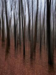 Trees (burnsmeisterj) Tags: olympus omd em10 trees icm leaves