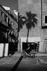In the shadow (Ivona & Eli) Tags: monochromatic bw street urban building construction biker outdoors tlv palmtree