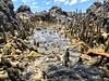 Waterway (engineergeronimo) Tags: nature seashore mangrove water sea waterway
