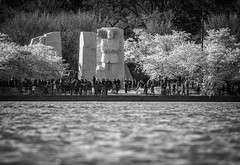 A different Perspective of a Monument (Airborne Guy) Tags: cherryblossoms spring washington dc monument tidalbasin statue water bw bnw blackandwhite monochrome people mlk martinlutherking king airborneguy