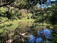 Jewel Lake, Afternoon (Melinda Stuart) Tags: lake water spring trees boughs branches afternoon earthday tilden park trunk fallentree trail jewel calm glass tree jewellake reflections