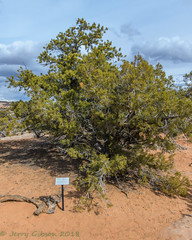 Canyonlands Island in the Sky Mesa Arch Trail 02-22-2018 (Jerry's Wild Life) Tags: canyonlands canyonlandsnationalpark islandinthesky mesaarchtrail moab utah