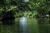 Ruhige Wasserstraße (v.boldychev) Tags: biospherereserve river canoeing beautiful quiet green water wood fluss spree hauptspree brandenburg biosphärenreservat spreewald kanufahrt schön ruhig grün bäume