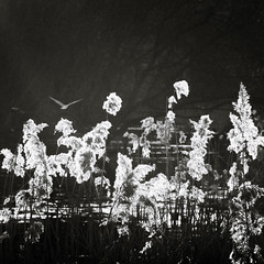 Внутренний свет / Light inside (Yuri Balanov) Tags: river spring water thaw snowbreak park contrast monochrome blackandwhite bwphoto bw black white shadows lights nature russia pentaxricoh pentax pentaxrussia pentaxk5iis bird trees plants