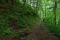 Sul sentiero da Pontemaglio a Veglio (frank28883) Tags: sentiero verbanocusioossola verde pontemaglio ossola valleossola valledeltoce path