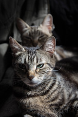 Junior & Chacha (ratonlaveur17) Tags: cats cat chat chats soleil light tabby tigré