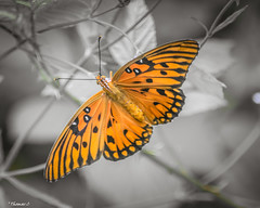 Butterfly Wings (that_damn_duck) Tags: nikon butterfly insect nature colorful