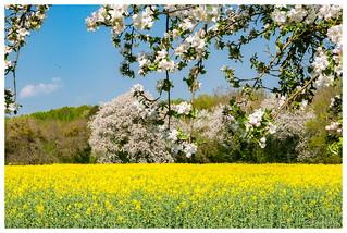 Toutes les couleurs du printemps