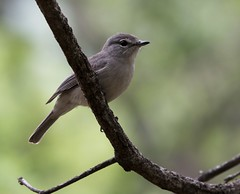 _DSC2375-editCC (Dave Krueper) Tags: africa southafrica birds birding bird