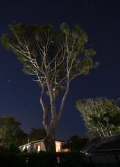 Stargazer (simon60d) Tags: stars stargazing night nightphotography fun light trees up sky