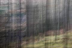 Conic Hill (stu1406) Tags: lochlomond conichill trees forest icm blur april 2018 scotland