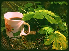 Tea time in the forest 🌳 (LUMEN SCRIPT) Tags: composition green forest nature beverage food tea cup mug leaves shadow light stilllife