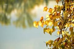 DSC_8057 (emina.knezevic) Tags: nature naturephotography waterfall autumn leafs woods reflection redleaf autumnleafs