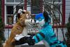 DSC_0231 (BerionHusky) Tags: fursuit mascot costume monschau furry fur