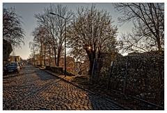 Les vieux pavés (Jean-Marie Lison) Tags: eos80d forest rue chemin pavés arbres saule contrejour bruxelles