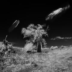 sad days (old&timer) Tags: background infrared composite surreal song4u oldtimer imagery digitalart laszlolocsei