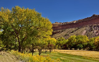 Trees and a Grassy Meadow in Fruita (Capitol Reef National Park)