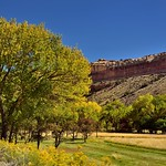 Trees and a Grassy Meadow in Fruita (Capitol Reef National Park) thumbnail