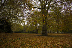 IMG_5118 (gungorme) Tags: nature landscape autumn fall tree trees color colors leaf london uk unitedkingdom england park doğa tabiat manzara sonbahar güz renkler ağaç ingiltere londra travel seyahat gezi beauty pretty beautiful leaves greenpark