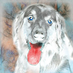 The Baskerville Hound (jaci XIII) Tags: ocãodosbaskerville fantasma literatura livro cachorro animal thebaskervilledog ghost literature dog book
