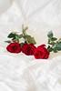 Flatlay (chubbchix) Tags: a6000 malaysia sabah macro flatlay strawberry carnation photography mirrorless 85mm sony roses flowers macrofriday rojored