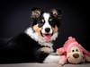Berry & friend (susie2778) Tags: berry panasonic dcg9 g9 leicadgnocticron425f12 portrait puppy bordercollie dog tricolour
