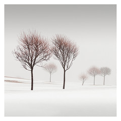 Winter Poetry (Vesa Pihanurmi) Tags: trees foggy misty winter snow minimalism trunks branches espoo finland treesarepoems poetryoftrees