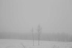 talk to me (Mindaugas Buivydas) Tags: lietuva lithuania bw winter december tree trees birch minimal minimalism fog mist snow cold mindaugasbuivydas sadnature