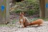 Eichhörnchen  /  Squirrel (wolfgang.kynast) Tags: eichhörnchen squirrel