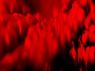 Kunst Fotografie abstrakt 4