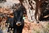 Monument Valley (doglington) Tags: monumentvalley utah navajotribalpark mysteryvalley petroglyphs