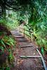 Forest Stairway (Sean Daniel) Tags: ocean pacificocean path witty aurorahdr bc canada hdr hike hiking lagoon markii park railing trail trees vanvouerisland victoria yyj