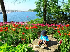 """""""One of the luckiest things that can happen to you in life is, I think, to have a happy childhood.""""  -  Agatha Christie (Trinimusic2008 -blessings) Tags: trinimusic2008 judymeikle nature today tulips flowers garden grandson may 2018 spring lake neighbourhood mimicowaterfrontpark linearpark humberbaypromenade cityoftoronto lakeontario etobicoke toronto to ontario canada quincy sonydschx80"""