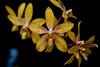 Orchid (roland_zink) Tags: nature frankfurtammain hessen deutschland deu