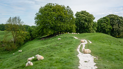 Sheep at Avebury (AppleTV.1488) Tags: avebury henge neolithic prehistoric sheep stonecircle stonehenge stonemonument trees westkennetavenue woodland worldheritagesite appletv1488 2018 may 12052018 12may2018 12 nikond7100 18250mmf3563 48mmfocallength35mm am noflash landscapeapectratio f11 ¹⁄₆₀secatf11