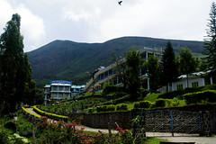 Munnar: Tea Gardens (deepgoswami) Tags: india kerala munnar teagarden tea kannandevanhills