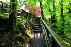 Walk Between Skelwith Bridge & Elterwater, May 2018 (5) (Janpram) Tags: trees skelwithbridge walkfromskelwithbridgetoelterwater lakedistrict cumbria englishlandscape landscape britishlandscape path nearambleside england