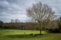 Miniature Pony Centre - North Bovey (alec0nline) Tags: outdoors pony shetlands dartmoor devon cornwall plymouth scenery nature nationalpark moors miniature landscape green animals uk