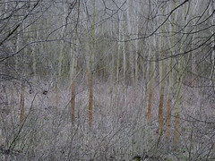 witness (szélléva) Tags: baja danube forest trees abstract nature
