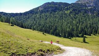 Sunnalm (1636m), Biberwier, Tirol - Austria (113305663)