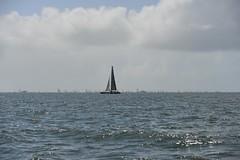 LOX_3812 (Lox Pix) Tags: australia queensland brisbanetogladstone yachtrace catamaran trimaran 2018 bossracing multihull loxpix moretonbay shorncliffe cabbagetreecreek rudder aground sailing loxworx