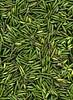 58847.01 Hosta (horticultural art) Tags: horticulturalart hosta seedpods chaos jumble pattern