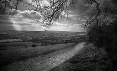box hill (spencerrushton) Tags: spencerrushton spencer rushton raw lightroom 1635mm 16mm london longexposure blackandwhite beautiful black bw wood walk white manfrottotripod manfrotto monochrome ruleofthirds daylight day dethoffield dayout digital dof canon canonlens canonl canon5dmkiii 5dmk3 5dmkiii zoomlens box boxhill nature nationaltrust landscape