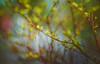 Green foliage (Dhina A) Tags: sony a7rii ilce7rm2 a7r2 enna werk münchen correlar 8cm f29 80mm correlar8cmf29 munchen german bubble bokeh triplet green foliage spring
